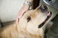Petting_Dog